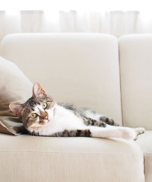 Happy cat on the couch in her new home at Centro Apartment Homes in Hillsboro, Oregon