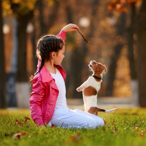 Child and her puppy playing outside at Olympus Grand Crossing in Katy, Texas