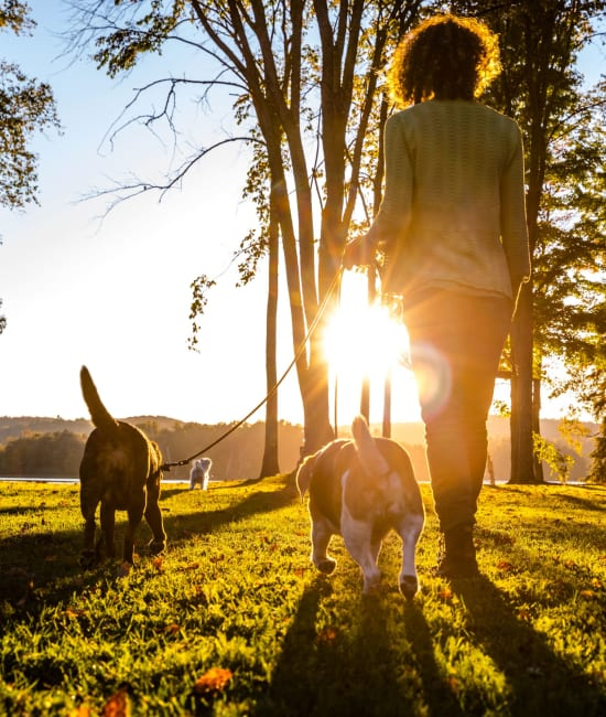 Resident walking pet near Auburn Townhomes in Auburn, California