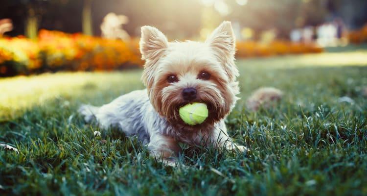 Adorable pet dog at Edgewood Park Apartments in Pontiac, Michigan