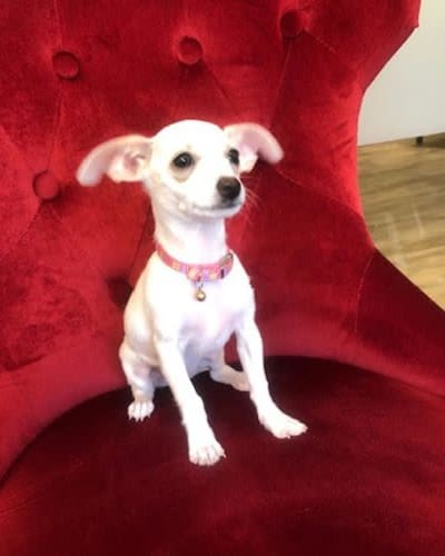 Tinkerbelle, a very small dog at Living Care Lifestyles