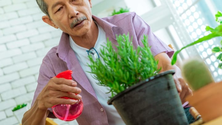 Senior man spraying plant with water