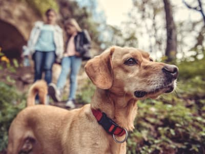 Learn about our pet policy at Oakwood Apartments in West Carrollton, Ohio