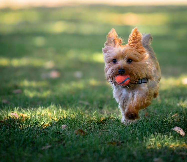 A dog running at a park near Ashton Park Apartments in Gulfport, Mississippi