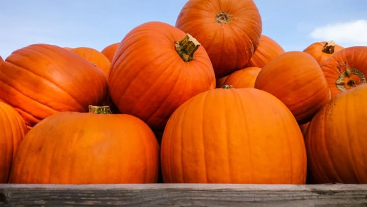 Pumpkins at Legends at White Oak in Ooltewah, Tennessee