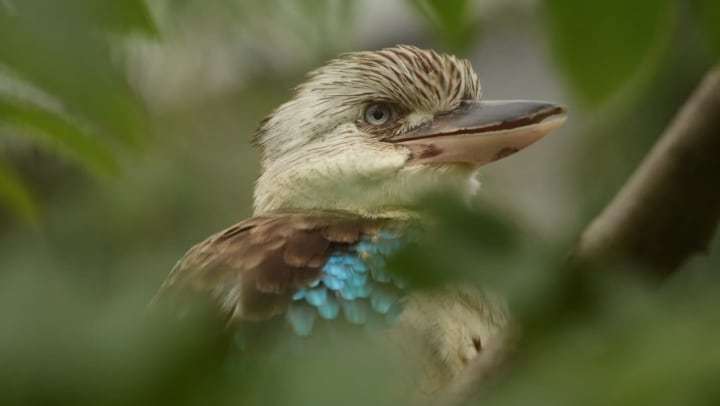 Native New Mexican bird at a nature preserve near Olympus Encantata in Albuquerque, New Mexico