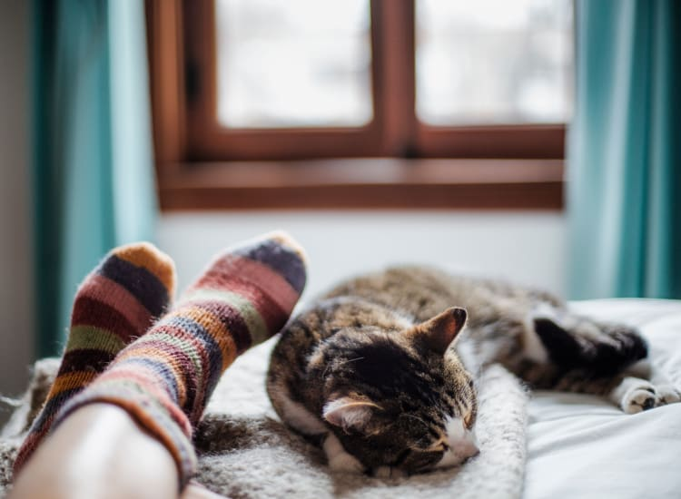 Cat sleeping by owner's legs at Castlewood Apartments in Walnut Creek, California