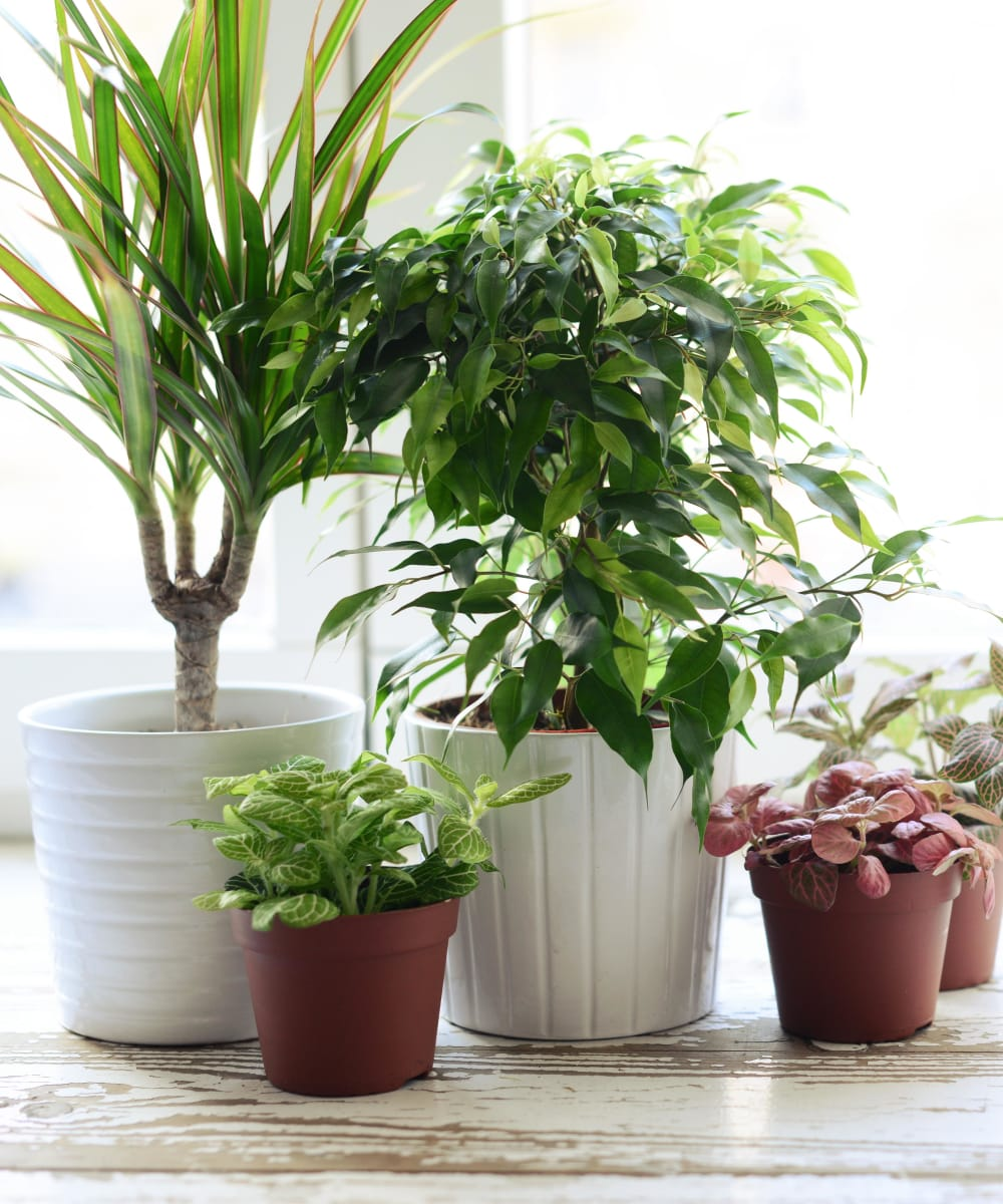 Very green and luscious house plants at Sofi Lyndhurst in Lyndhurst, New Jersey