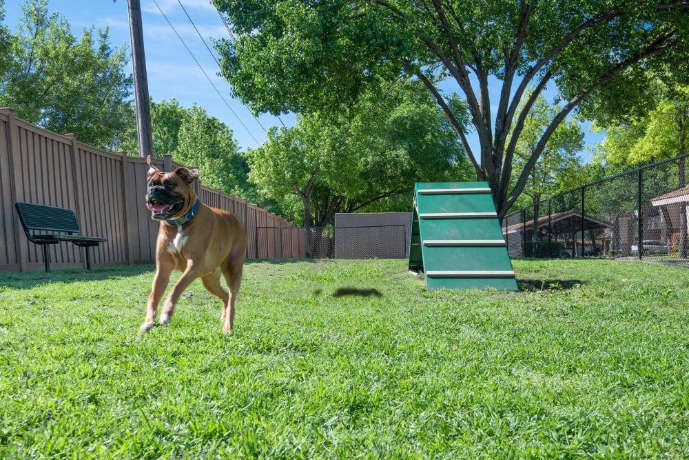 Enjoy Apartments with a Dog Park at Rancho Palisades