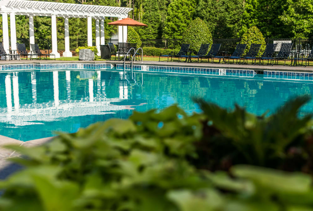 Close up of lush greenery near Bryant at Summerville's sparkling swimming pool in Summerville, South Carolina