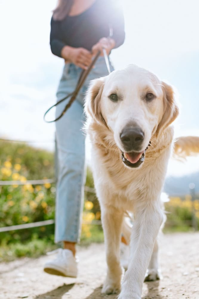 Pet-friendly living at 12 South Apartments in Nashville, Tennessee