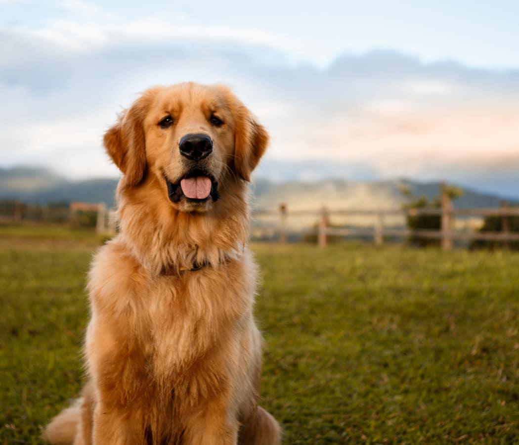 Dog in a field near Copperfield Apartments in Oklahoma City, Oklahoma
