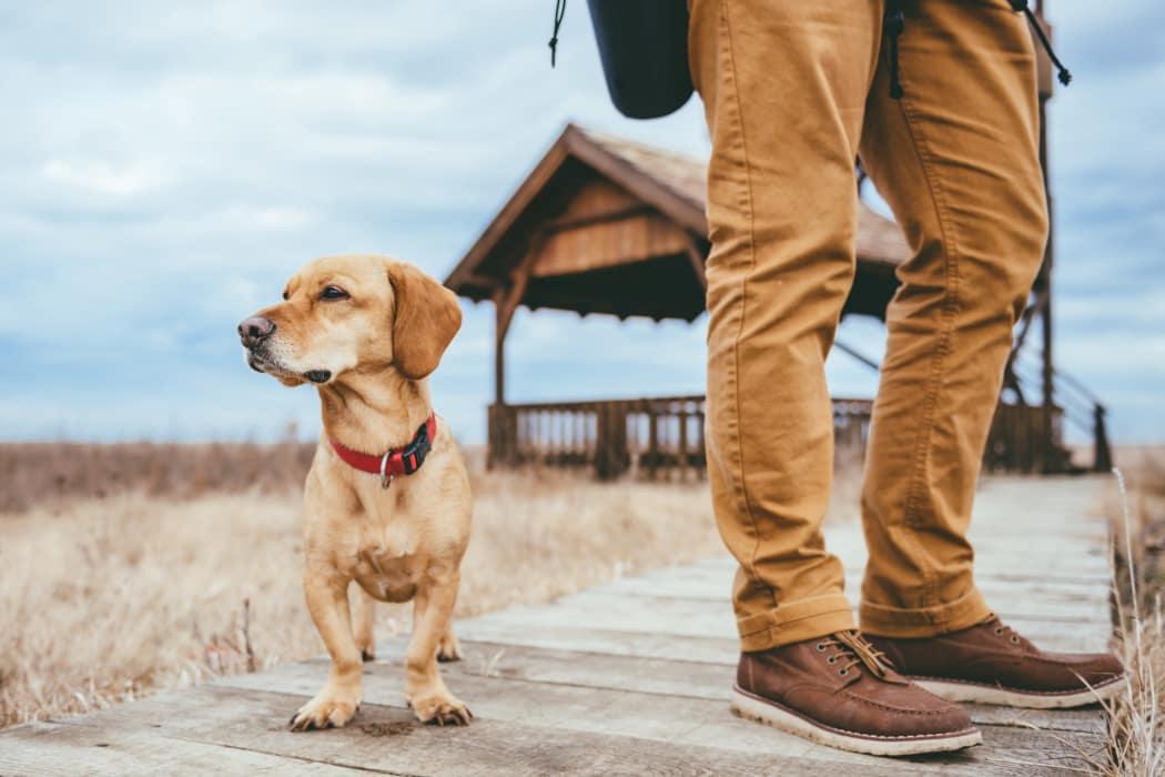 Man walking his dog in Corpus Christi, Texas near Icon at Corpus Christi