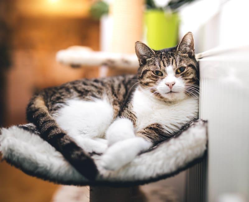 Cat enjoying her new apartment home at Hidden Creek in Morrow, Georgia