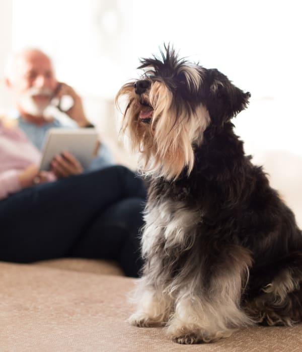 A small dog living with a resident at Inspired Living Alpharetta in Alpharetta, Georgia