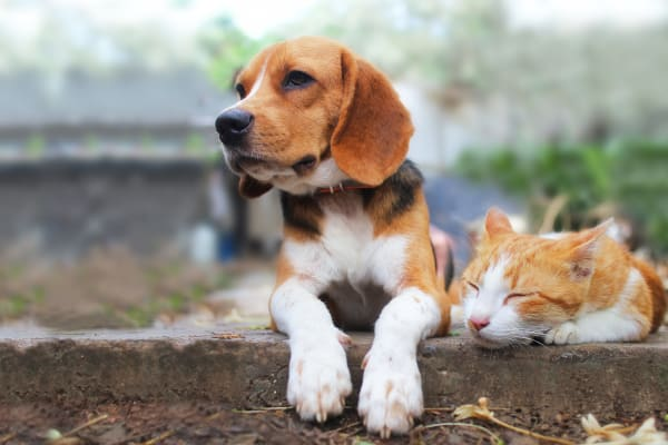 Dog and cat loving their new neighborhood at Laurel Pines Apartments in Richmond, Virginia
