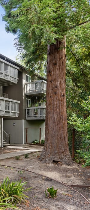 Beautiful forested community at Regency Plaza Apartment Homes in Martinez, California