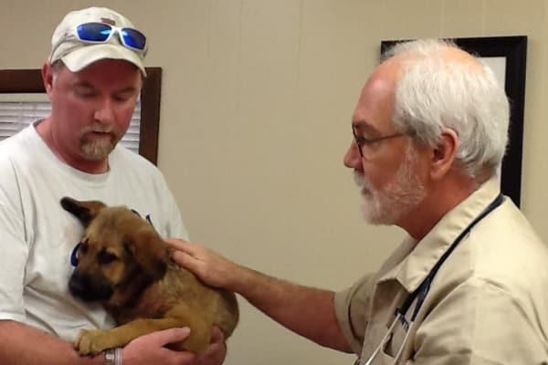 Puppy Wellness Exam at Lee's Summit Animal Hospital