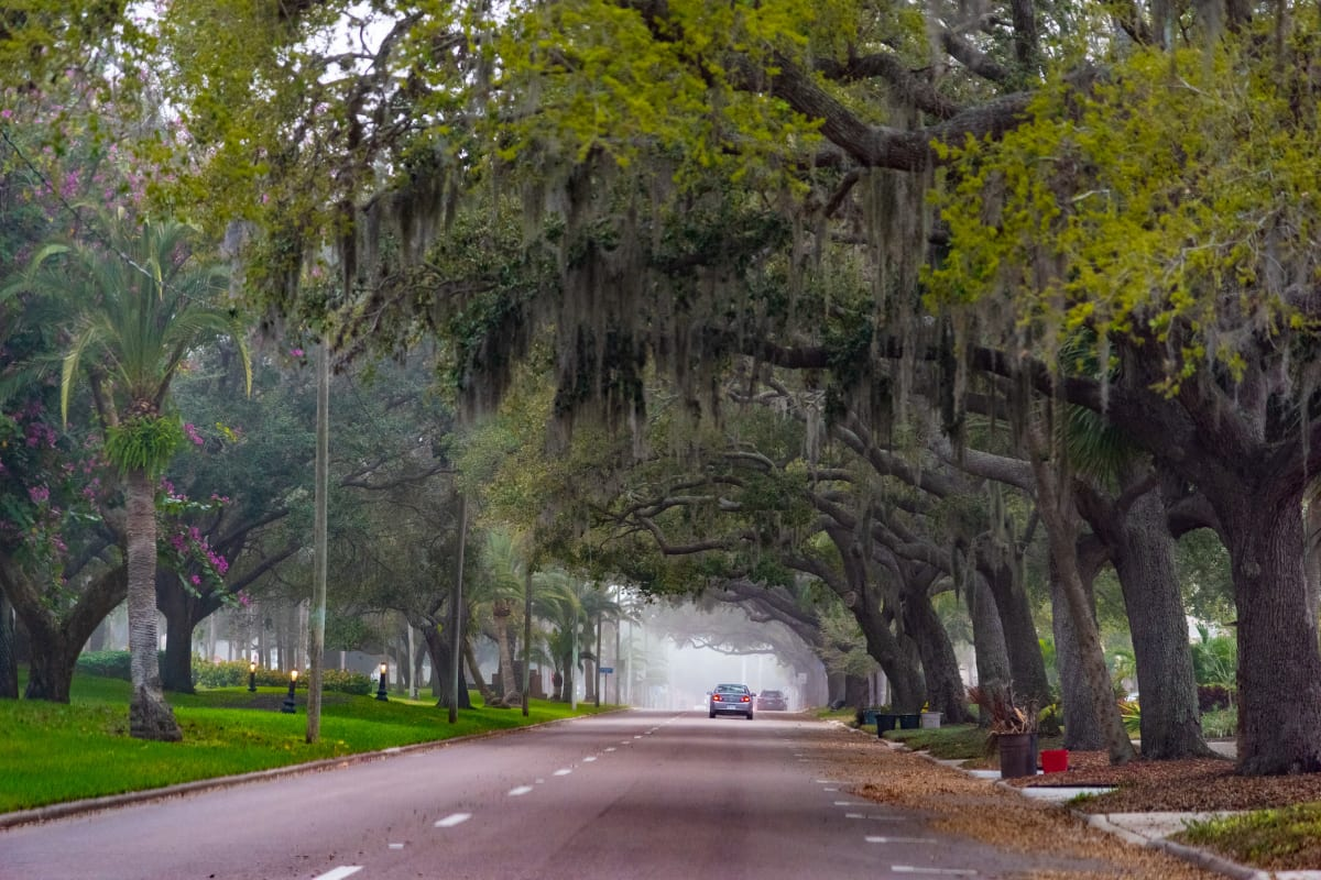 driving under large willow trees near Sunset Lake Village Senior Living in Venice, Florida