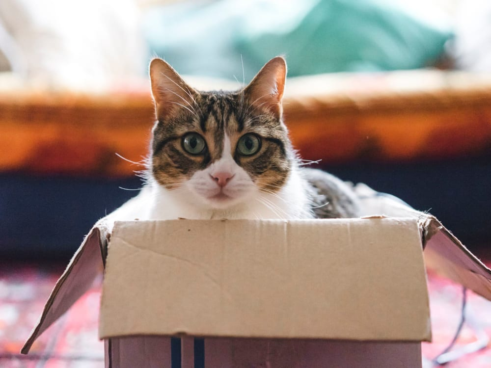 Happy cat in a box in her new home at Villa Vicente in Los Angeles, California