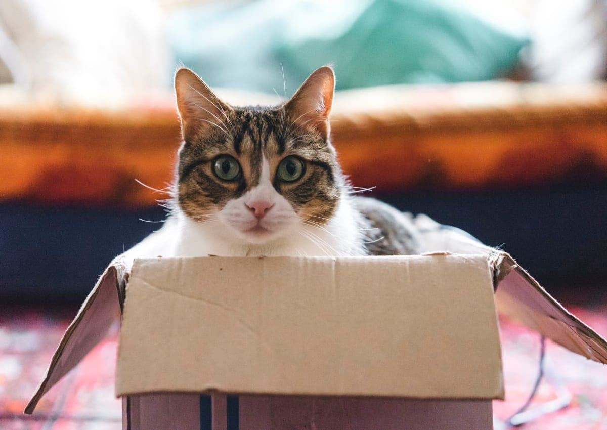 Cat in a box in her new home at Mariners Village in Marina del Rey, California