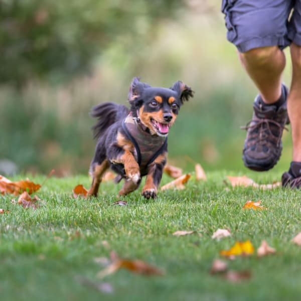 Happy dog running through a park near Wood Crest Apartment Homes in Chalmette, Louisiana