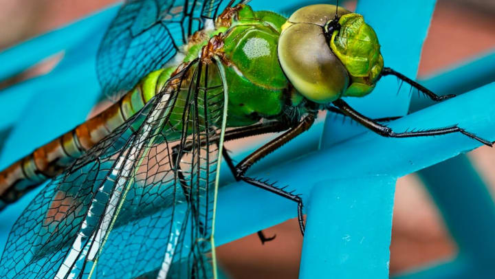 Green dragonfly at Sibley Nature Center near Anatole on Briarwood in Midland, Texas