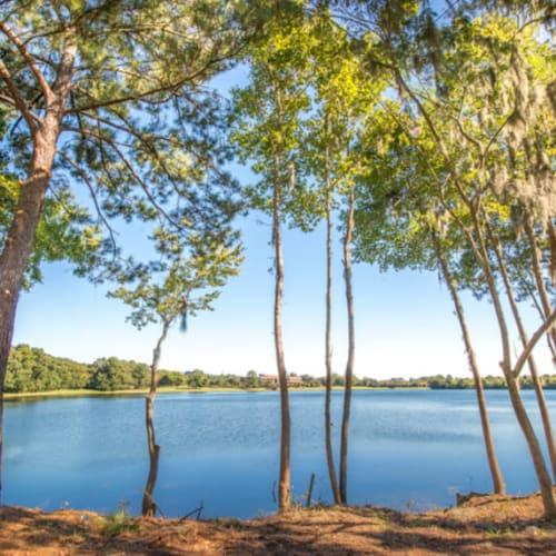 Mature trees around the lake at Walden at Chatham Center in Savannah, Georgia