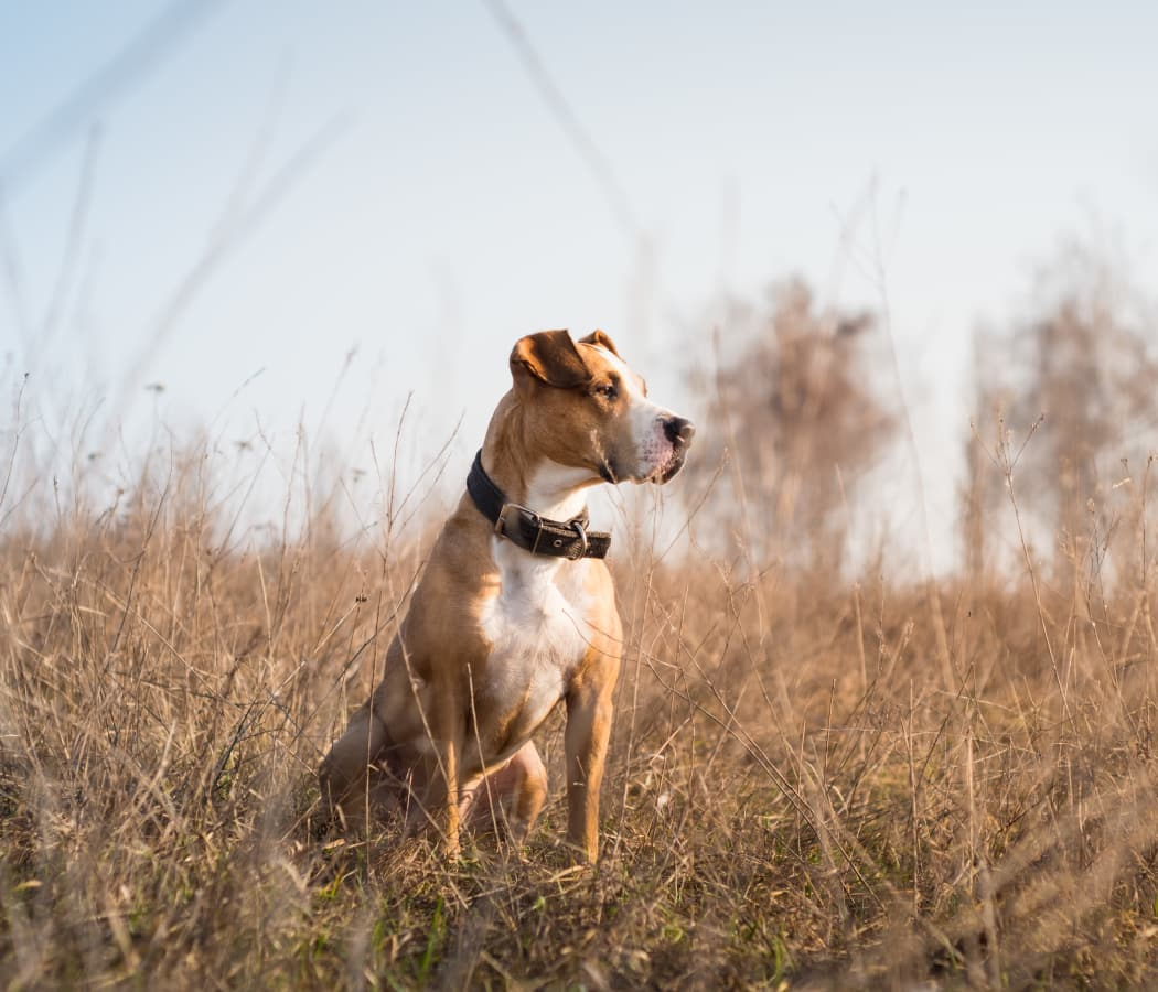 Dog in a field in Maize, Kansas near Watercress Apartments