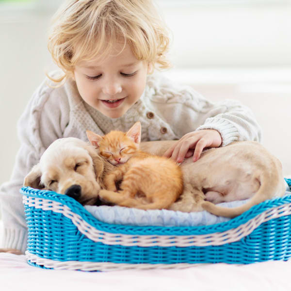 Child with a puppy and kitten at Olympus at Waterside Estates in Richmond, Texas