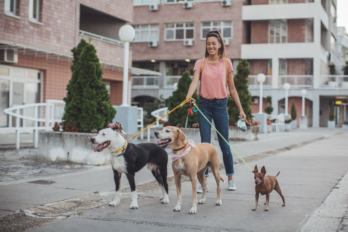 Resident taking her dogs out for a walk around the neighborhood near Vidorra McKinney Avenue in Dallas, Texas