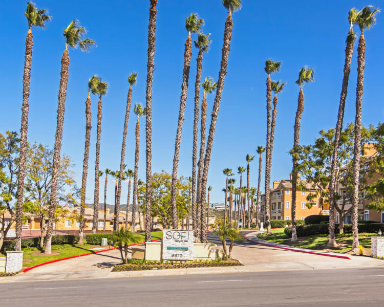 Palm trees and our sign welcoming residents and their guests to our community at Sofi Canyon Hills in San Diego, California