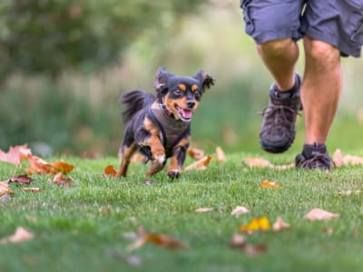 Learn about our pet policy at The August Apartments in Lexington, Kentucky
