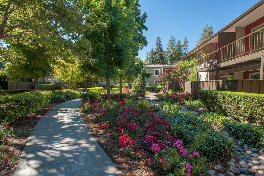 Beautifully manicured landscape with flowers at Flora Condominium Rentals in Walnut Creek, California