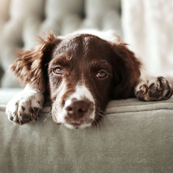 Pet-friendly apartments at The Manchester Apartments in Euless, Texas