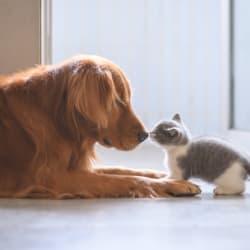 Cat and dog at Avilla Paseo in Phoenix, Arizona