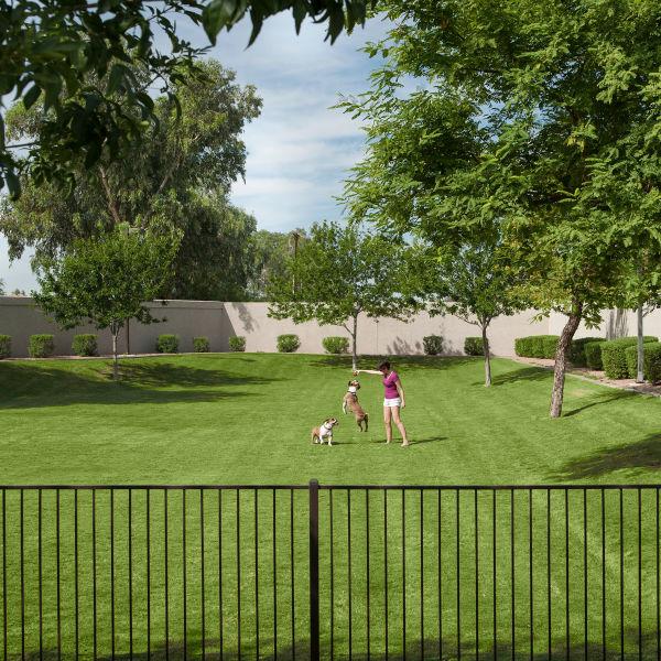 Dog park at San Marbeya in Tempe, Arizona