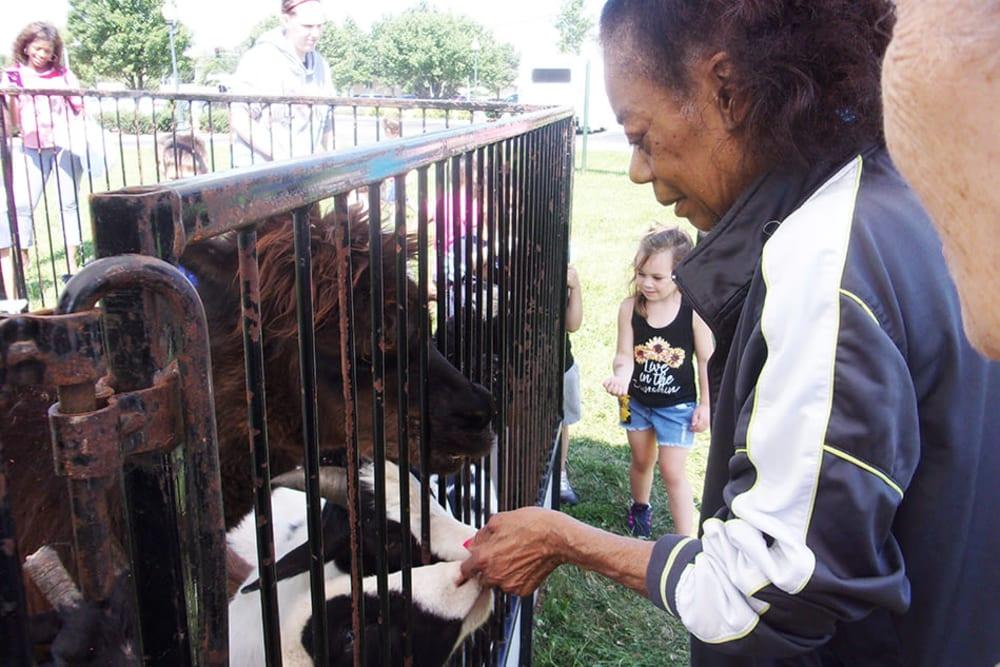 senior resident feeding animals