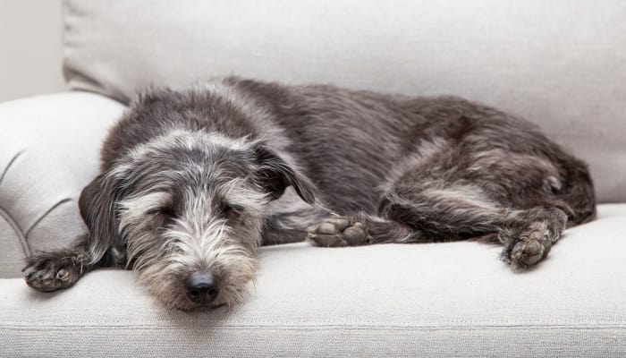 Dog laying on a couch at Arbor Village in Summerville, South Carolina