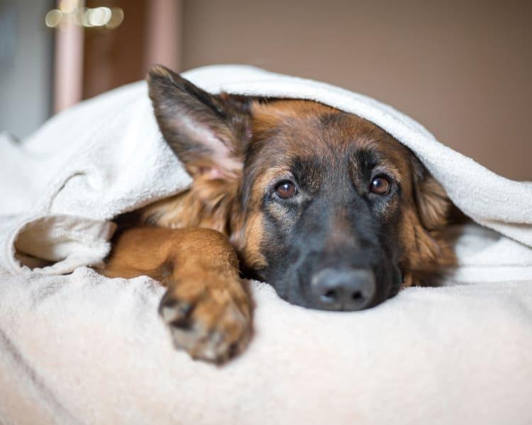 Doggo enjoying her new home at Sofi Riverview Park in San Jose, California