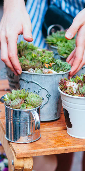 Succulents thriving in containers at Deer Valley Apartment Homes in Roseville, California