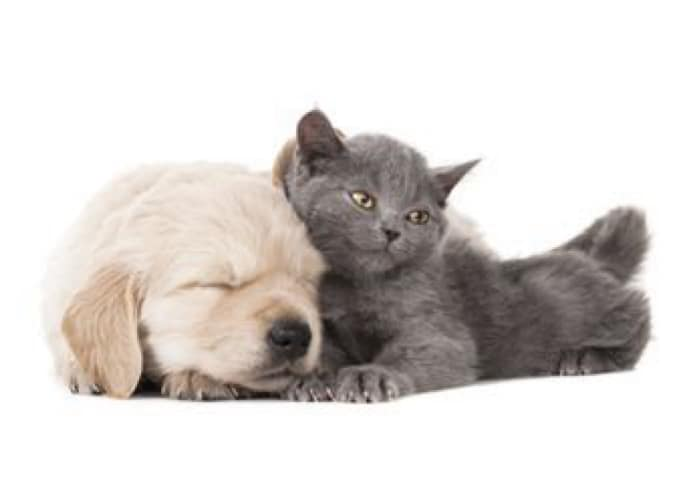 Happy puppy and kitten resting together at Value Pet Clinic - Renton