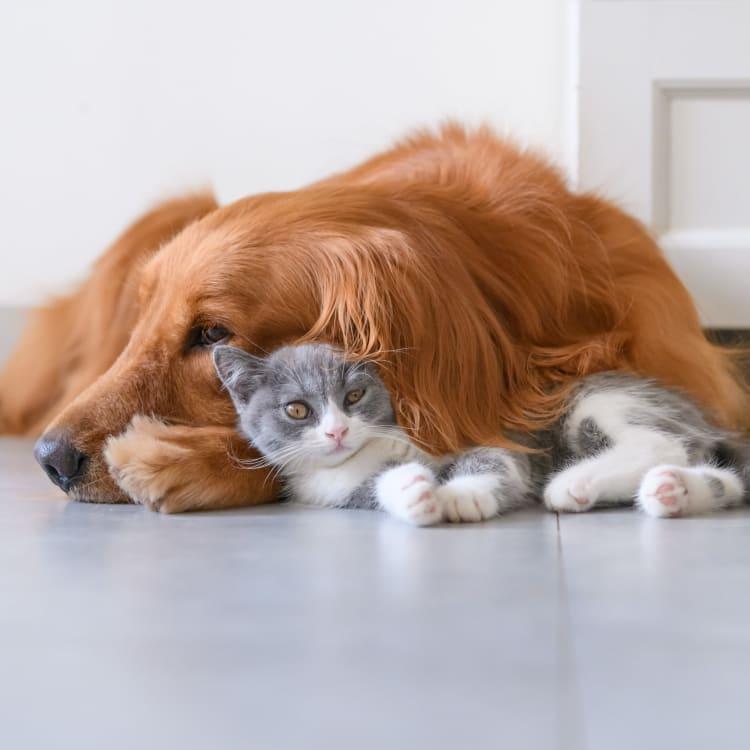 Dog and kitten cuddling at City View Vinings in Atlanta, Georgia