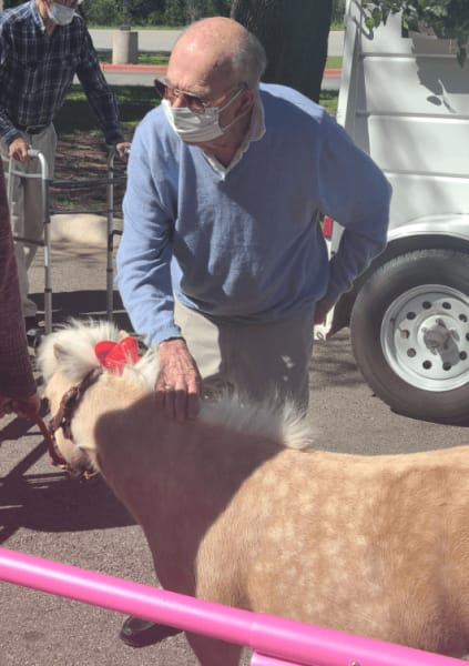 A Georgetown resident pets one of the adorable mini horses.