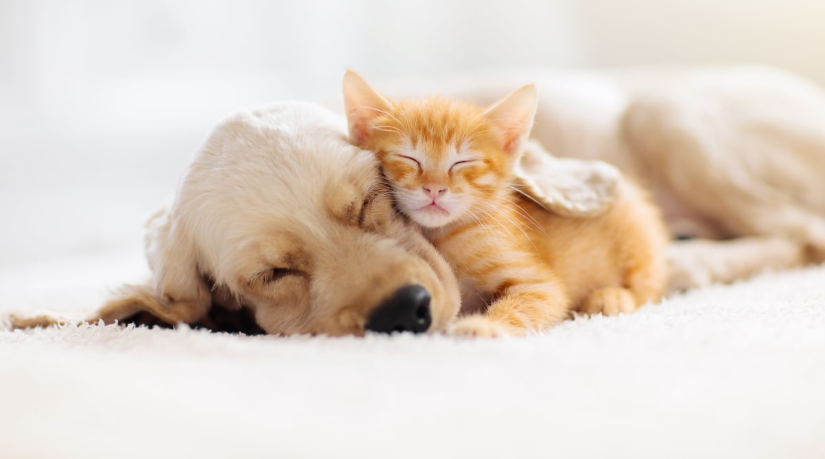 We love pets at Harbor Village Apartments! Contact us to learn more about our pet-friendly apartments in Richmond