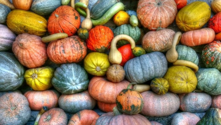 An array of colorful pumpkins at Hall