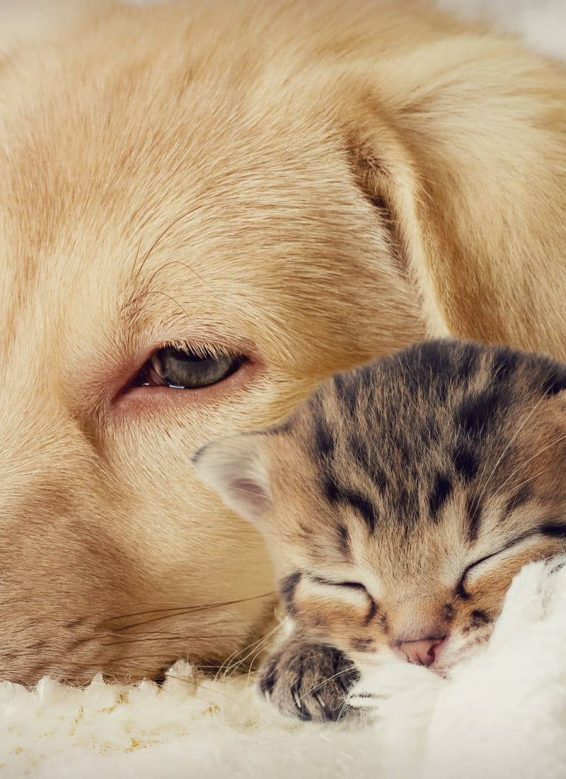View our pet policy at Marquis at Stone Oak in San Antonio, Texas