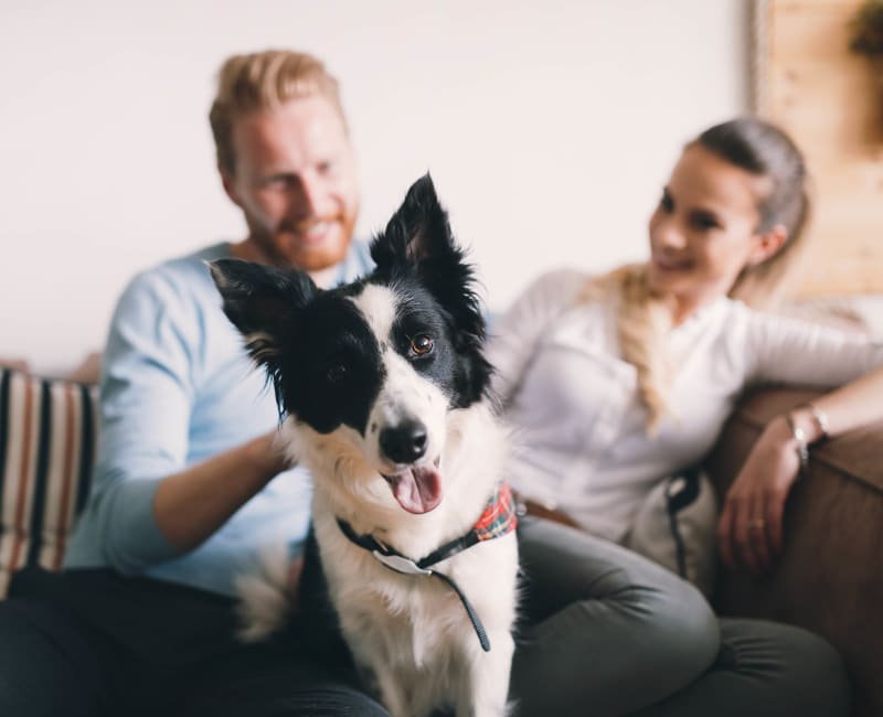 Couple and their dog sitting on a couch at The Lakes of Schaumburg in Schaumburg, Illinois
