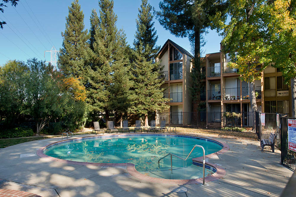 Swimming pool surrounded by forested walkways through Atrium Downtown in Walnut Creek, California