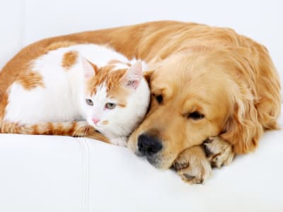 Learn about our pet policy at Cabo San Lucas in Houston, Texas